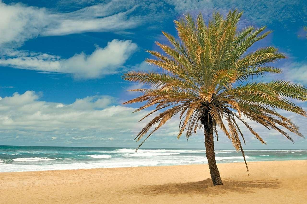 Plaża na Hawajach (USA) - Hawaje to archipelag położony w północno-środkowej części Oceanu Spokojnego, w odległości prawie 4000 km od kontynentalnych Stanów Zjednoczonych, których częścią są od 1959 roku. Są na (12×8)