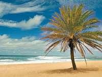 Plaża na Hawajach (USA)
