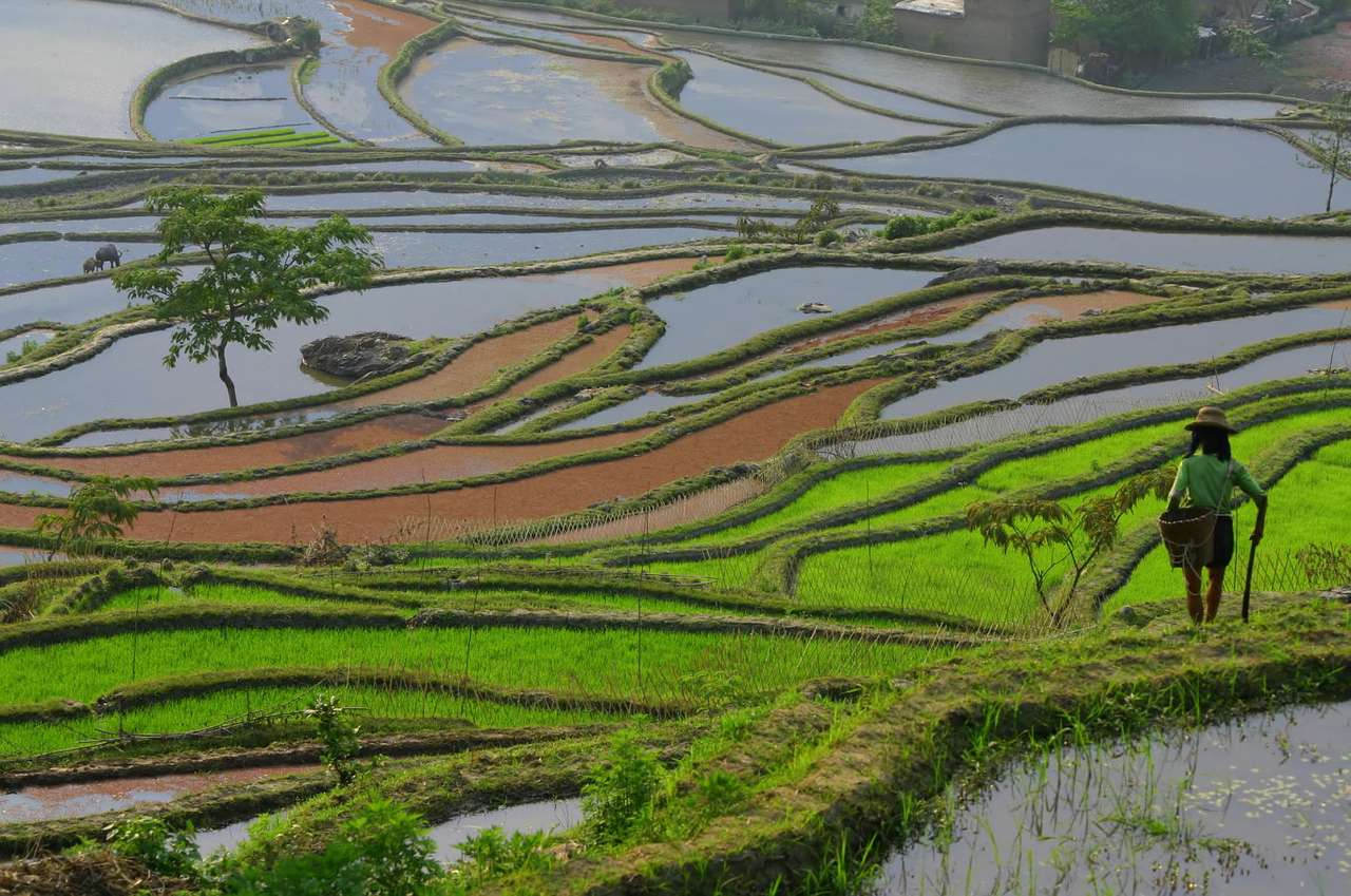 Tarasy ryżowe Yuanyang (Chiny) - Tradycyjne tarasy ryżowe w regionie Yuanyang są uznawane za największe i najbardziej malownicze na świecie. Z tego powodu są też popularną atrakcją turystyczną. Yuanyang położone jest w gó (17×11)