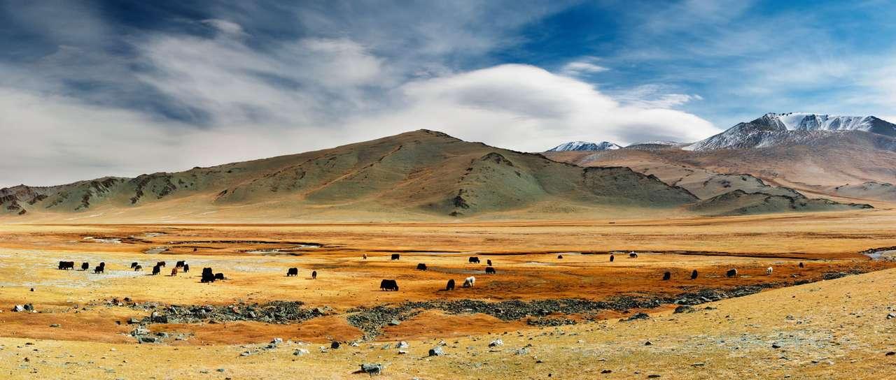 Stepy Mongolii - Jaki pasące się na półpustynnym stepie w Mongolii. Na obszarze około pięciokrotnie większym od Polski żyje niecałe trzy miliony ludzi, co sprawia, że ten stepowy kraj należy do obszarów o (14×6)