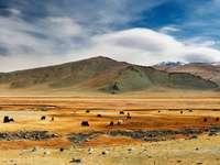 Stepy Mongolii