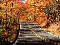 Jesień w stanie Michigan (USA)
