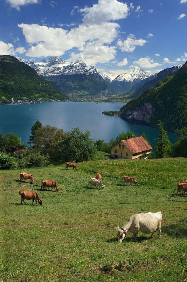 Jezioro Czterech Kantonów (Szwajcaria) - Czwarte pod względem wielkości jezioro Szwajcarii, położone w centralnej części kraju. Jego powierzchnia to 114 kilometrów kwadratowych, a maksymalna głębokość sięga ponad 200 metrów. Jez (7×10)