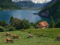 Jezioro Czterech Kantonów (Szwajcaria)