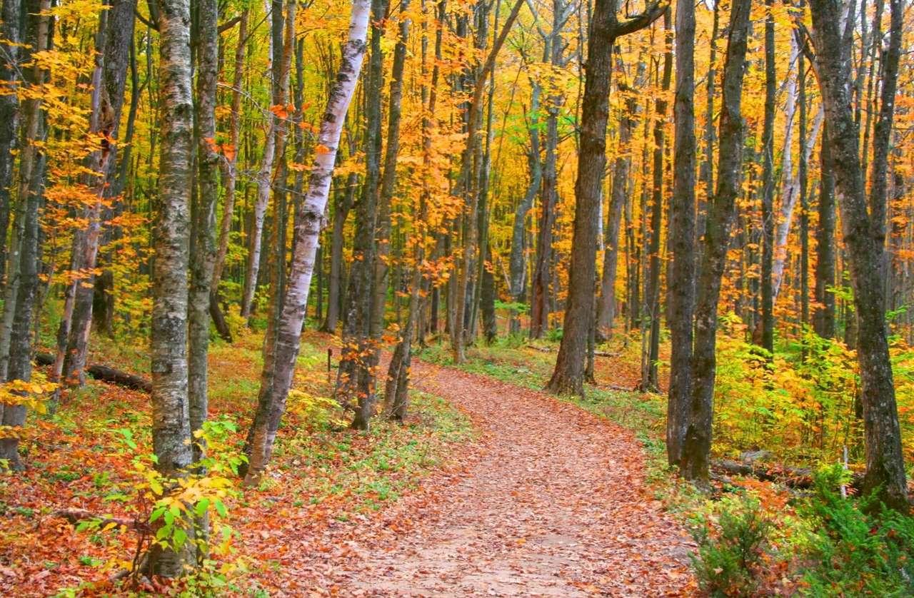 Jesień w Michigan (USA) - Jesienna sceneria Półwyspu Górnego w amerykańskim stanie Michigan. Stan Michigan położony jest na dwóch półwyspach. Powierzchnia Półwyspu Górnego to prawie jedna trzecia powierzchni całeg (9×6)