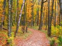 Jesień w Michigan (USA)