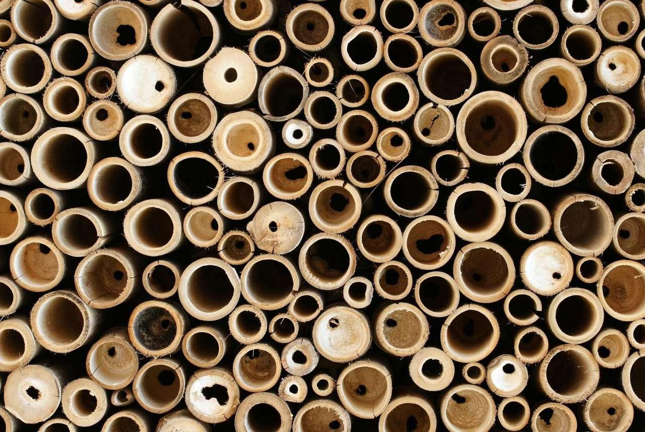 Bambusy - Bambusy to zróżnicowana grupa roślin o wielu gatunkach. Niektóre osiągają zaledwie kilkanaście centymetrów, podczas gdy inne tworzą lasy wysokie na czterdzieści metrów. Bambusy należą do (17×11)