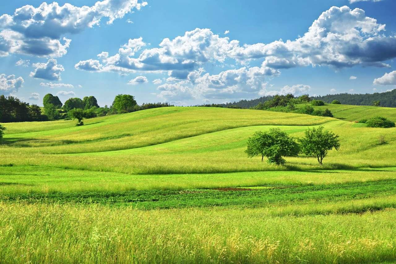 Zielone pagórki - Idyliczny, pagórkowaty krajobraz wczesnym latem (10×7)