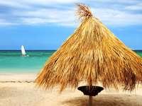 Parasol palmowy