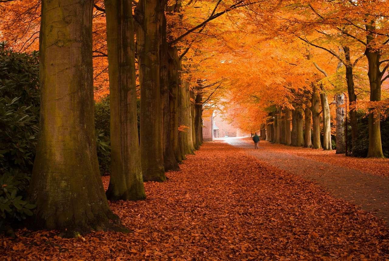 Jesienna aleja - Późną jesienią przeważającymi kolorami są żółty, złoty i czerwony. Liście na drzewach zmieniają barwę gdy dni stają się coraz krótsze a światła jest coraz mniej. Powoli zmniejsza si (8×5)