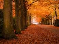 Jesienna aleja puzzle ze zdjęcia