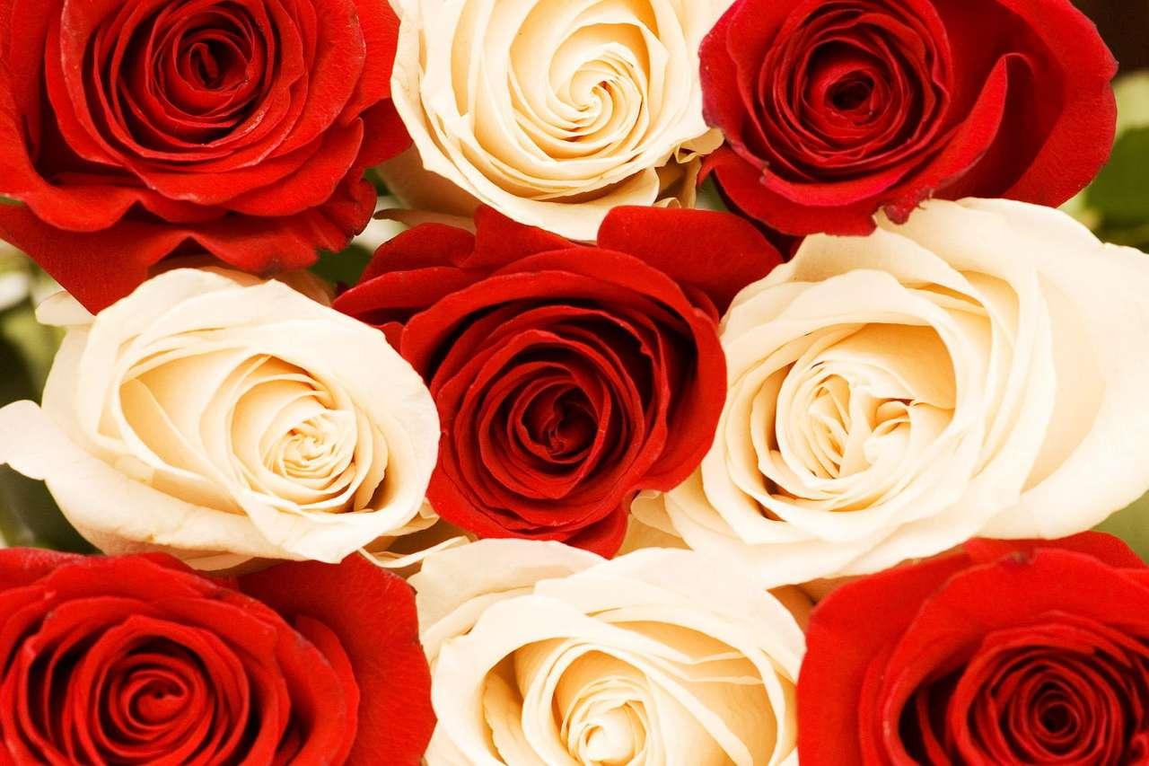 Róże czerwone i białe