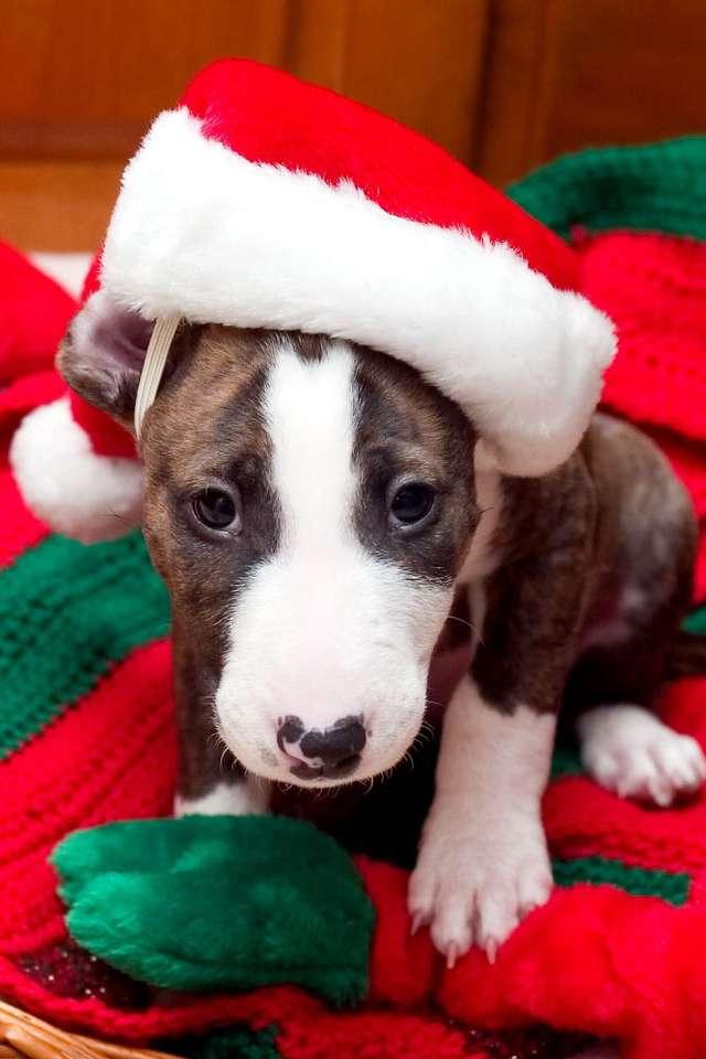 Pomocnik Mikołaja - Świętego Mikołaja zna każdy - długa siwa broda, czerwony strój, charakterystyczna czapka, także w tym kolorze. Jest powszechnie rozpoznawalny. Renifery i Elfy, też są osobami publicznymi. Kto (6×9)