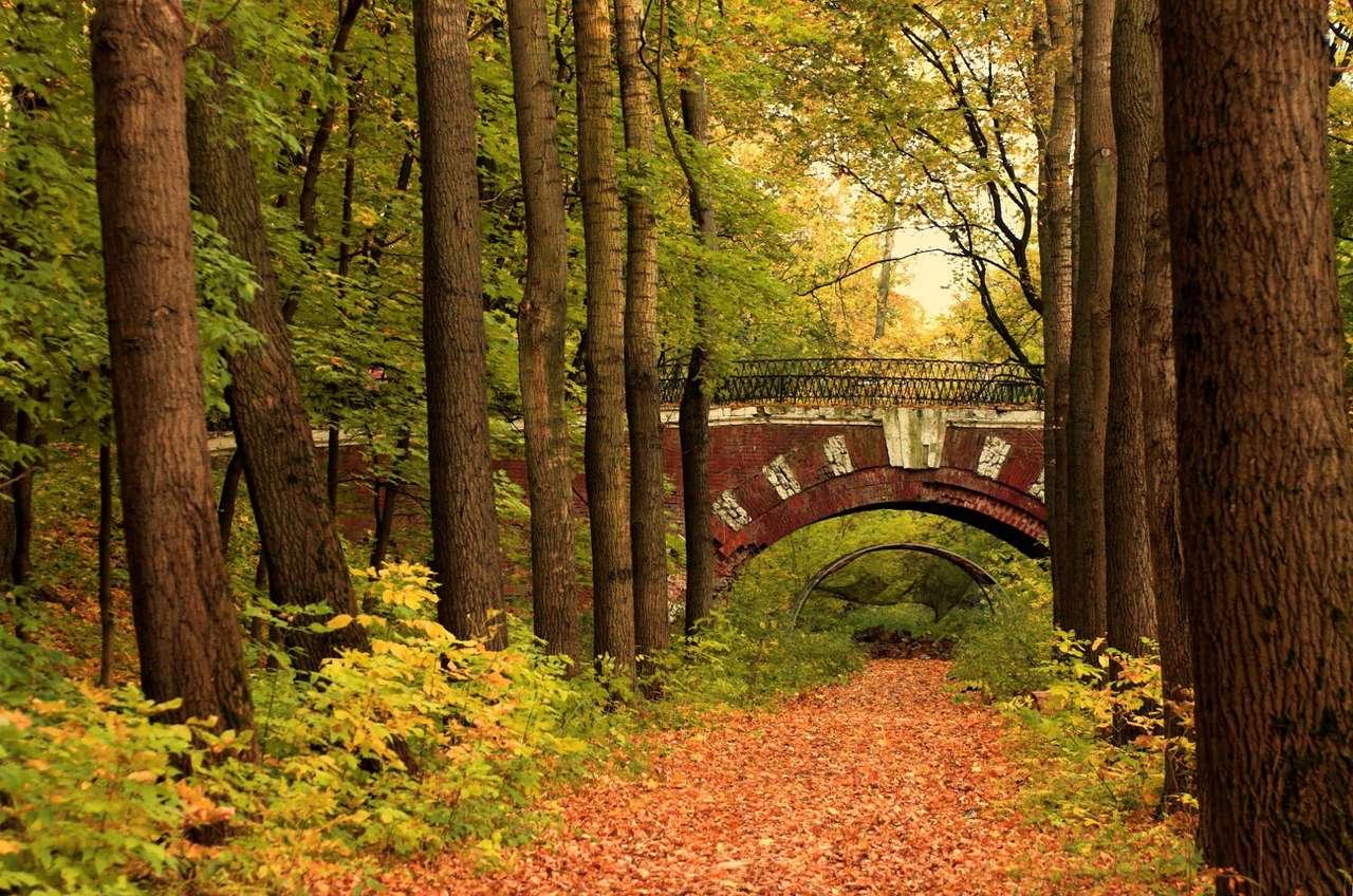 Wiadukt w lesie - Jesienna sceneria rosyjskiego lasu. Bardzo dobre miejsce na popołudniowy spacer (10×7)