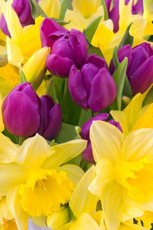 Wiosenne kwiaty - Tulipany i żonkile to kwiaty nierozerwalnie kojarzące się z wiosną. Pod koniec zimy, nawet osoby lubiące zimowe rozrywki, czekają z utęsknieniem, aż przyroda obudzi się do życia, wszystko si (6×9)