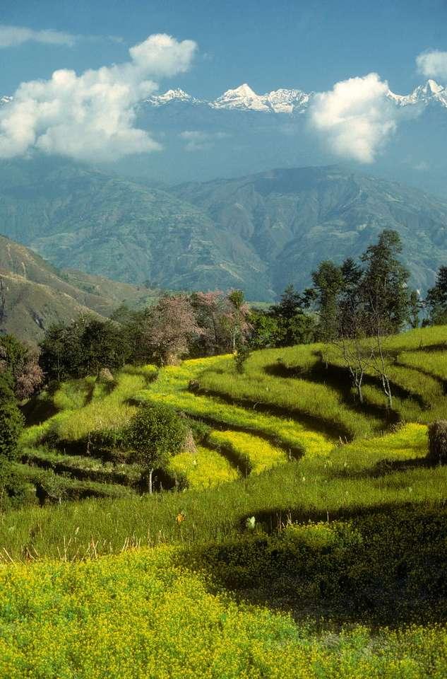Pola uprawne w regionie Helambu (Nepal) - Region Helambu leży u podnóża Himalajów, w pobliżu stolicy Nepalu - Katmandu. W Nepalu, mimo trudnych warunków uprawy, w rolnictwie pracuje większość społeczeństwa. Z tego sektora pochodzi (5×7)