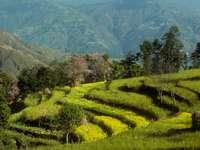 Pola uprawne w regionie Helambu (Nepal)