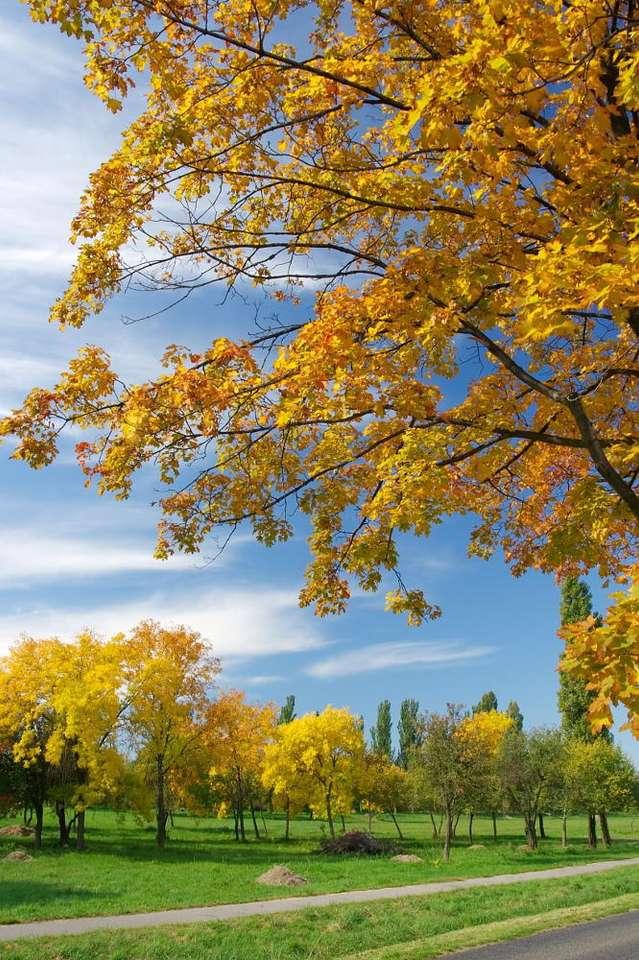 Złota jesień - Jesień jest niewątpliwie najpiękniejsza, gdy niebo jest błękitne i świeci słońce. Liście, które zmieniły kolor na żółty lub czerwony. w ciepłym jesiennym świetle wyglądają jakby był (6×10)