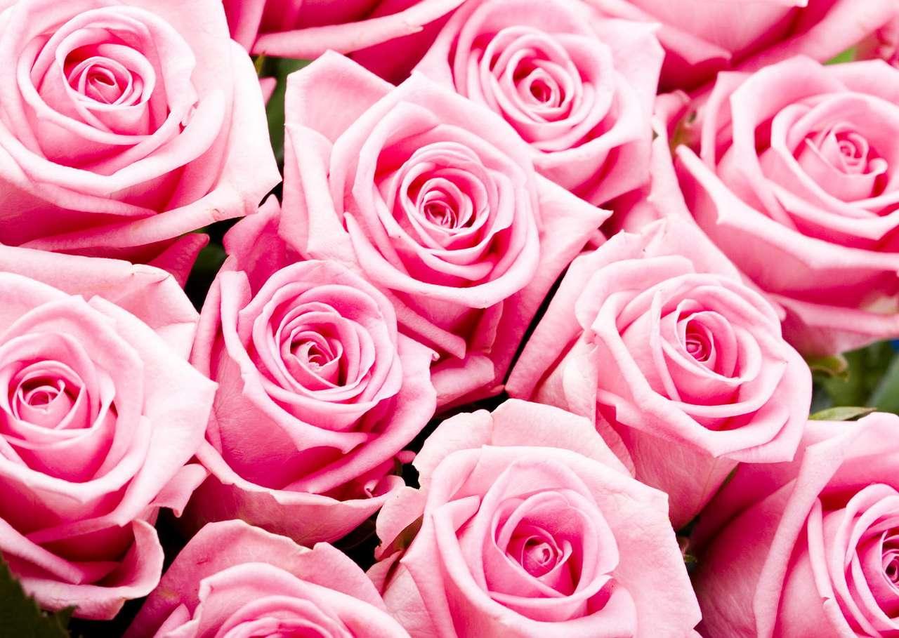 Różowe róże - Róże to piękne i wysoko cenione kwiaty ozdobne, chociaż mają też wiele innych zastosowań. Wiele osób docenia ich walory kulinarne. Owoce róży często przerabia się na, bogate w witaminę C, (10×7)