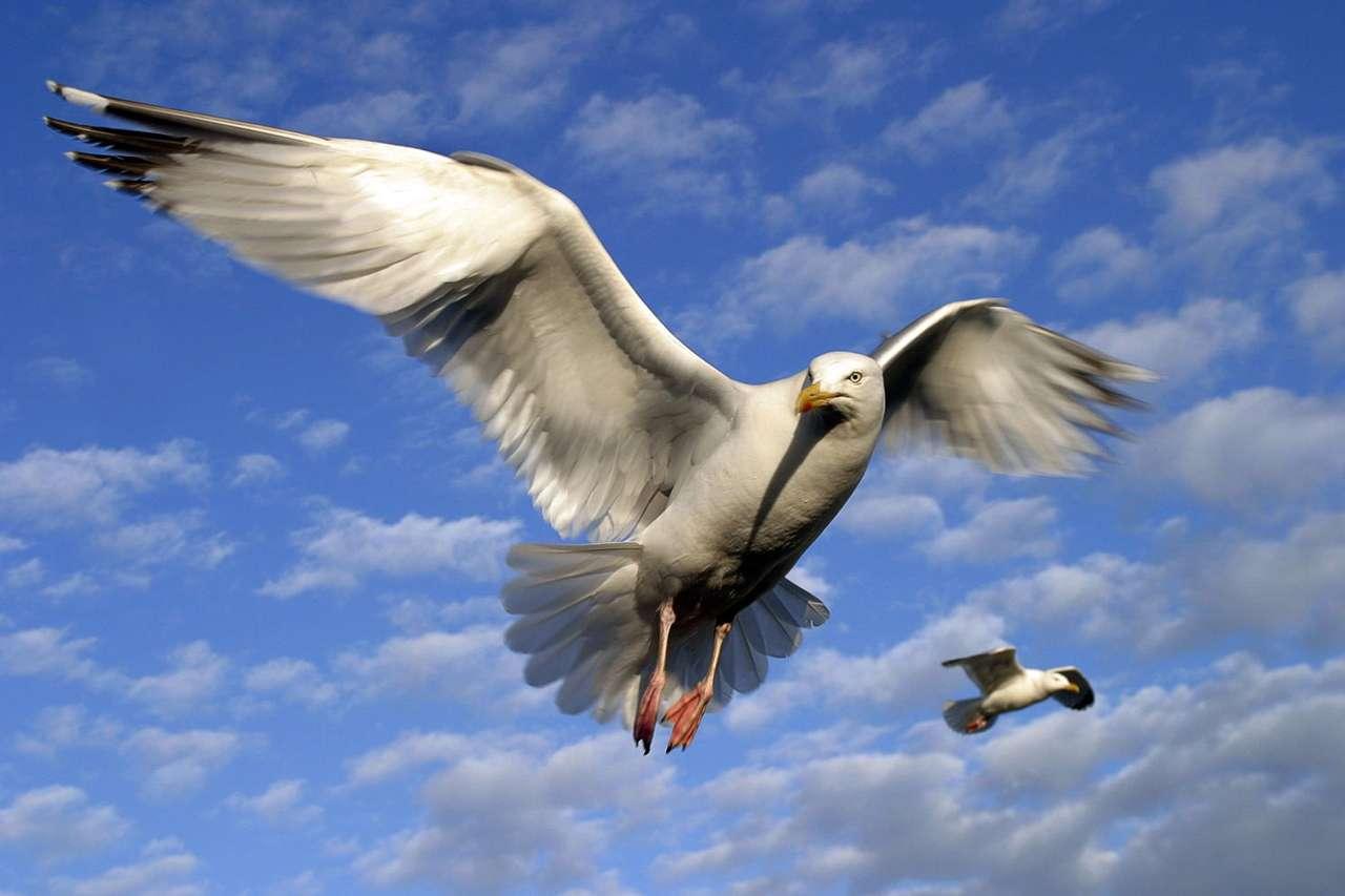 Mewy w locie - W epoce samolotów mogłoby się wydawać, że ludzie mogą już przestać marzyć o lataniu, gdyż marzenia te całkowicie się spełniły. Czym innym jednak musi być uczucie, które towarzyszy w cz (9×6)