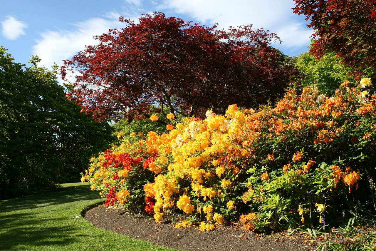 Krzewy różanecznika - Różanecznik (inaczej rododendron) należy do roślin z rodziny wrzosowatych. W naturze spotkać go można głównie w Azji, ale ten ozdobny krzew jest chętnie hodowany również na pozostałych kon (14×9)
