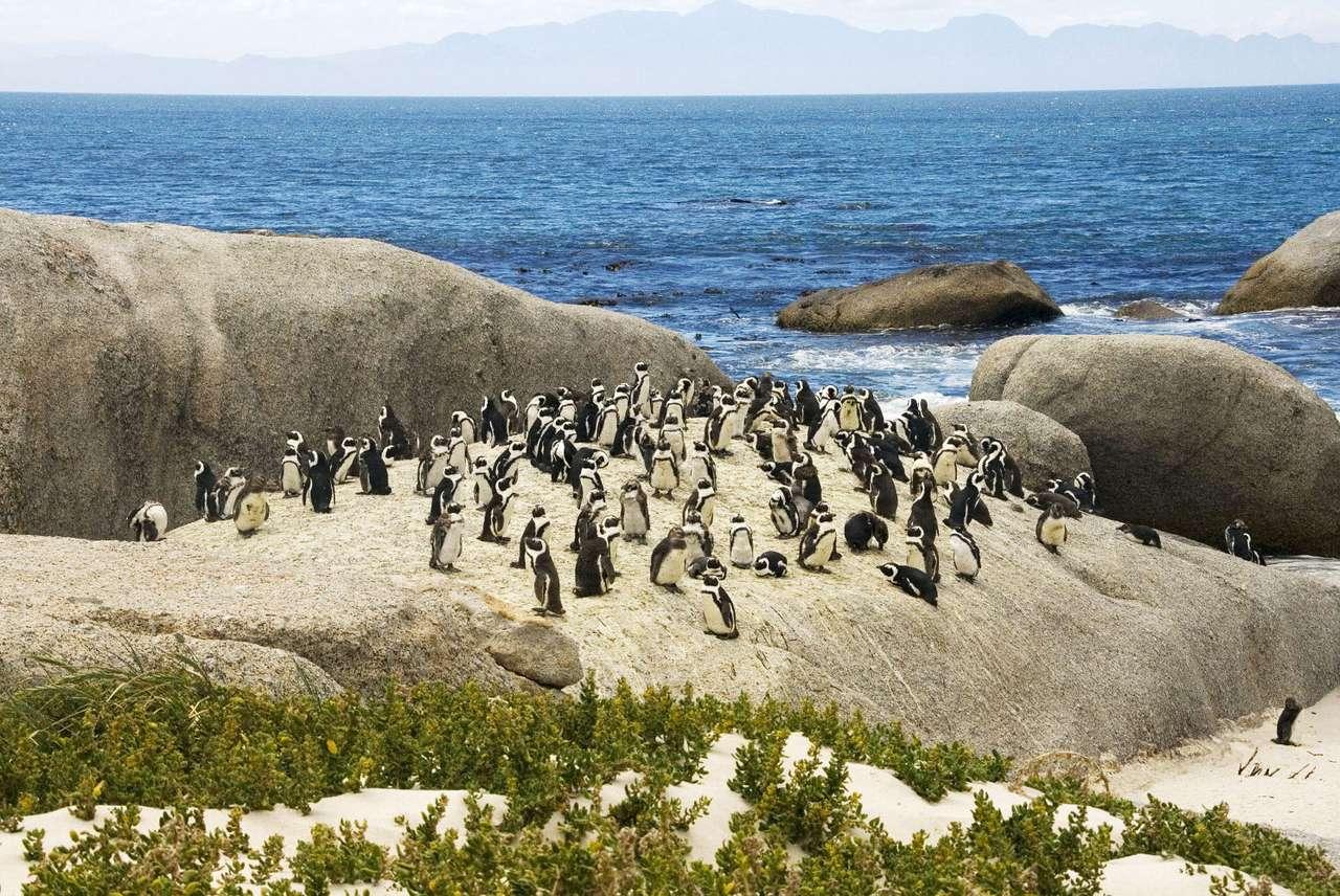 Kolonia pingwinów w RPA - Na co dzień zwykliśmy kojarzyć pingwiny z lodowymi pustkowiami Arktyki bądź Antarktydy. Otóż okazuje się, że te sympatyczne ptaki można spotkać również w cieplejszych rejonach naszej plan (10×6)