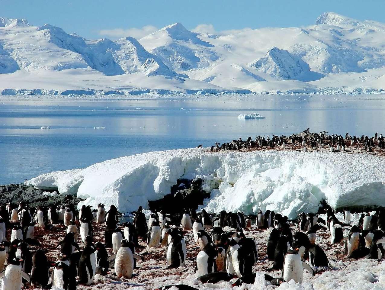 Pingwiny antarktyczne - Pingwiny antarktyczne (inaczej pingwiny maskowe) to średniej wielkości ptaki z rodziny pingwinów, zamieszkujące zimne morza wokół Antarktydy, Szetlandów Południowych, Wysp Bouveta, Orkadów Po (10×7)