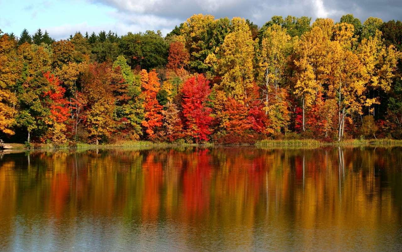 Las jesienią - Najbardziej charakterystyczna oznaka jesieni, jaką jest zmiana koloru liści drzew, najlepiej widoczna jest w kompleksach lasów liściastych. Występowanie na jednej przestrzeni mnóstwa drzew pozwa (12×7)
