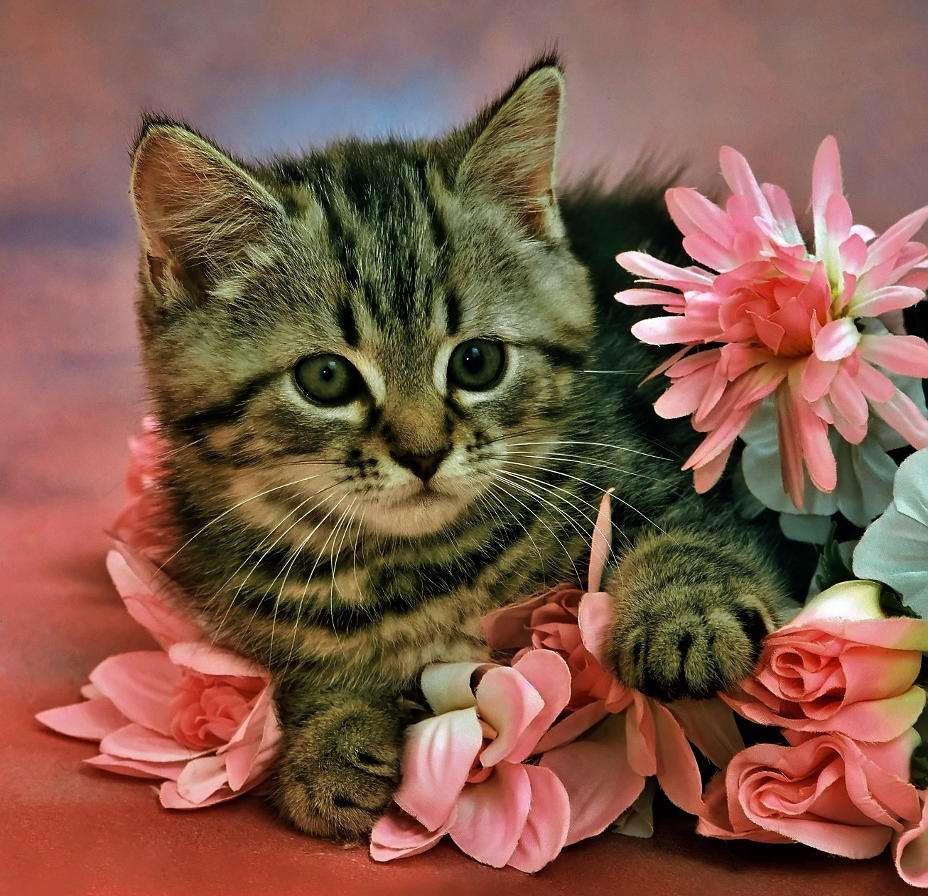 Kocię - Mianem kociąt określa się potomstwo zwierząt z rodziny kotowatych. W jednym miocie samica kota rodzi od 1 do nawet 8 kociąt. Kocięta dwa tygodnie po urodzeniu są zupełnie ślepe, potem otwiera (8×8)