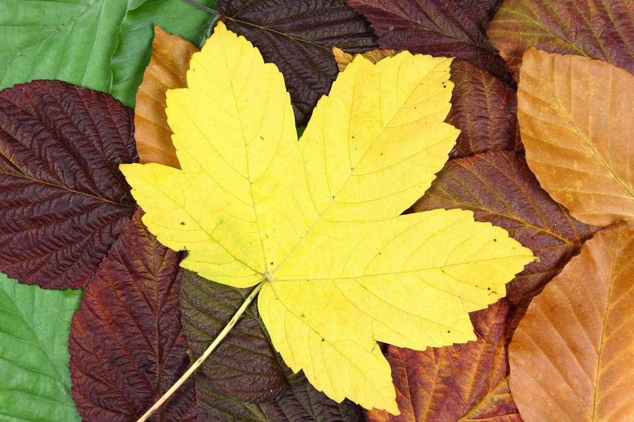 Liście jesienią puzzle online