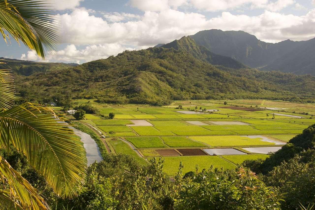 Krajobraz wyspy Kauai (USA)