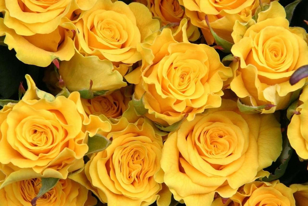 Róża żółta - Róża żółta, odmiana róży pospolitej, występuje powszechnie na całej półkuli północnej. Prawdopodobnie pochodzi z Azji. Różę żółtą uznaje się za roślinę dziką, jednak często up (10×7)