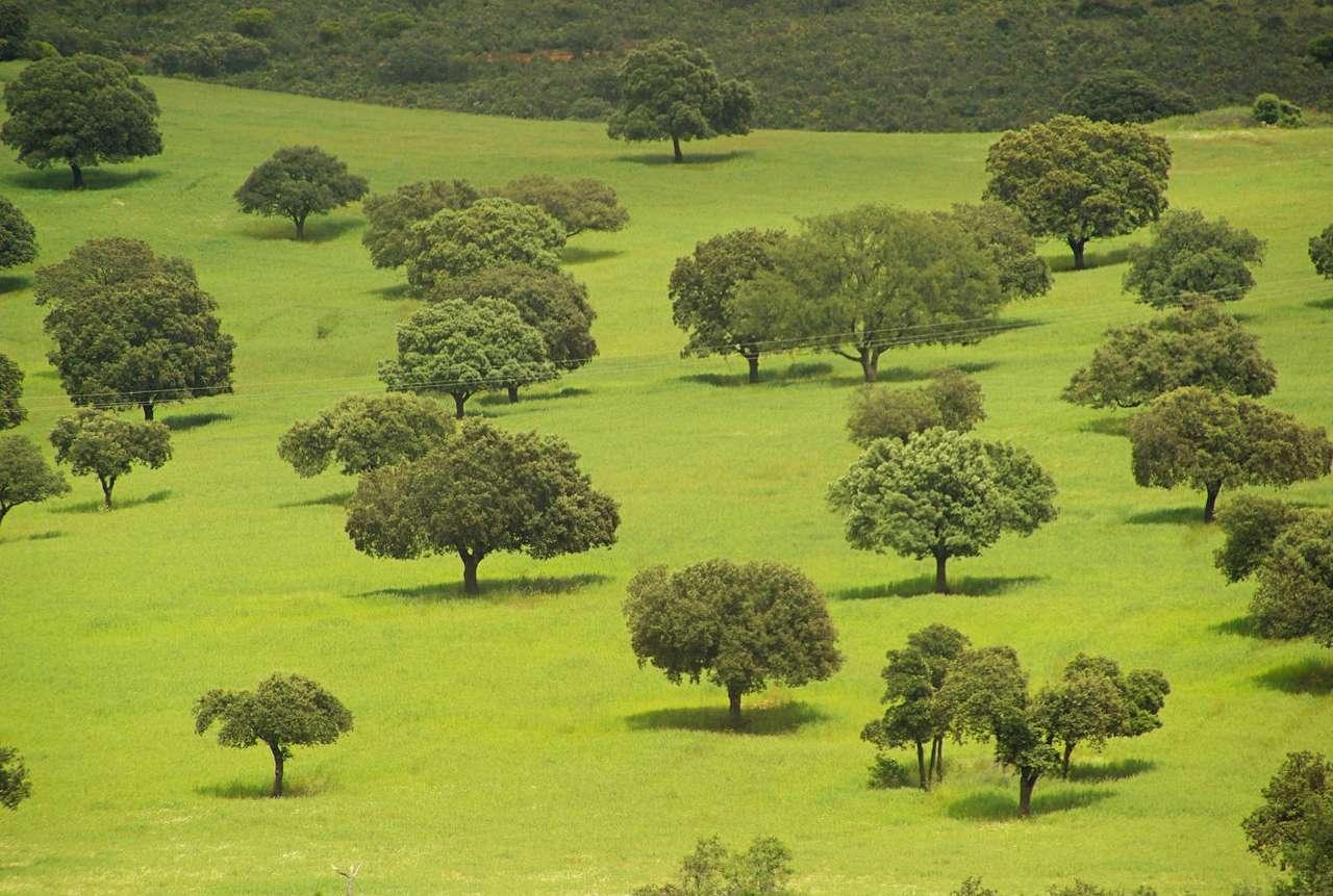 Dehesa - Dehesa to wielohektarowe, sztucznie zagospodarowane obszary agroleśnicze na Półwyspie Iberyjskim (w Hiszpanii i Portugalii). Łączną wielkość takich obszarów szacuje się na cztery miliony hek (12×8)