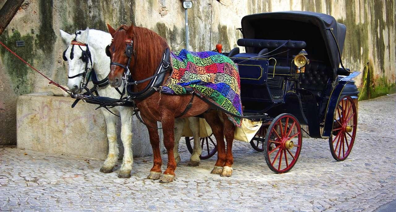 Dwukonna bryczka - Mianem bryczki określa się czterokołowy, lekki pojazd konny, ciągnięty zwykle przez jednego lub dwa konie, w przeciwieństwie do karety odkryty (współcześnie często czasowo zakrywany ruchomym (13×6)