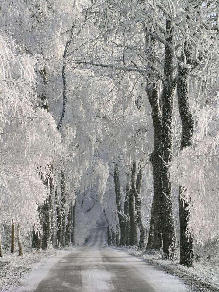 Zaśnieżona droga - Śnieg padający zimą w klimacie umiarkowanym i jednoczesna obecność mrozu są gwarancją, że wszystkie możliwe elementy krajobrazu pokryją się piękną warstwą białego puchu. Śnieg otula dr (6×8)
