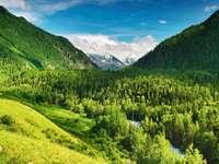 Dolina w górach Ałtaj (Rosja)