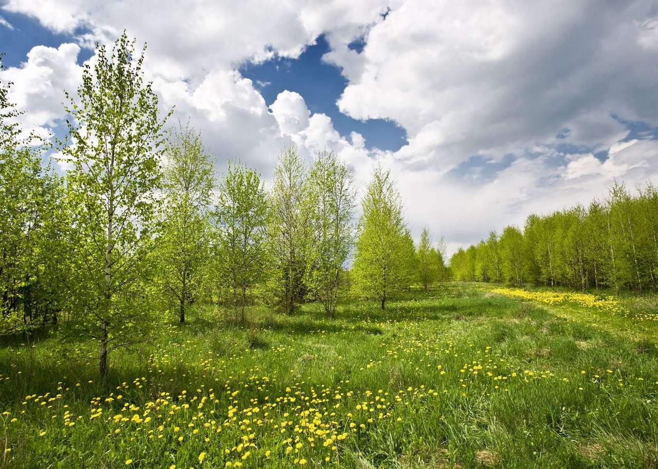 Łąka - Krajobraz natury w pogodny dzień to wspaniały, sielski widok. Dzięki kwiatom na zielonej łące, drzewom pełnym liści oraz błękitnemu niebu ze śnieżnobiałymi chmurami łąki sprawiają wraż (9×6)
