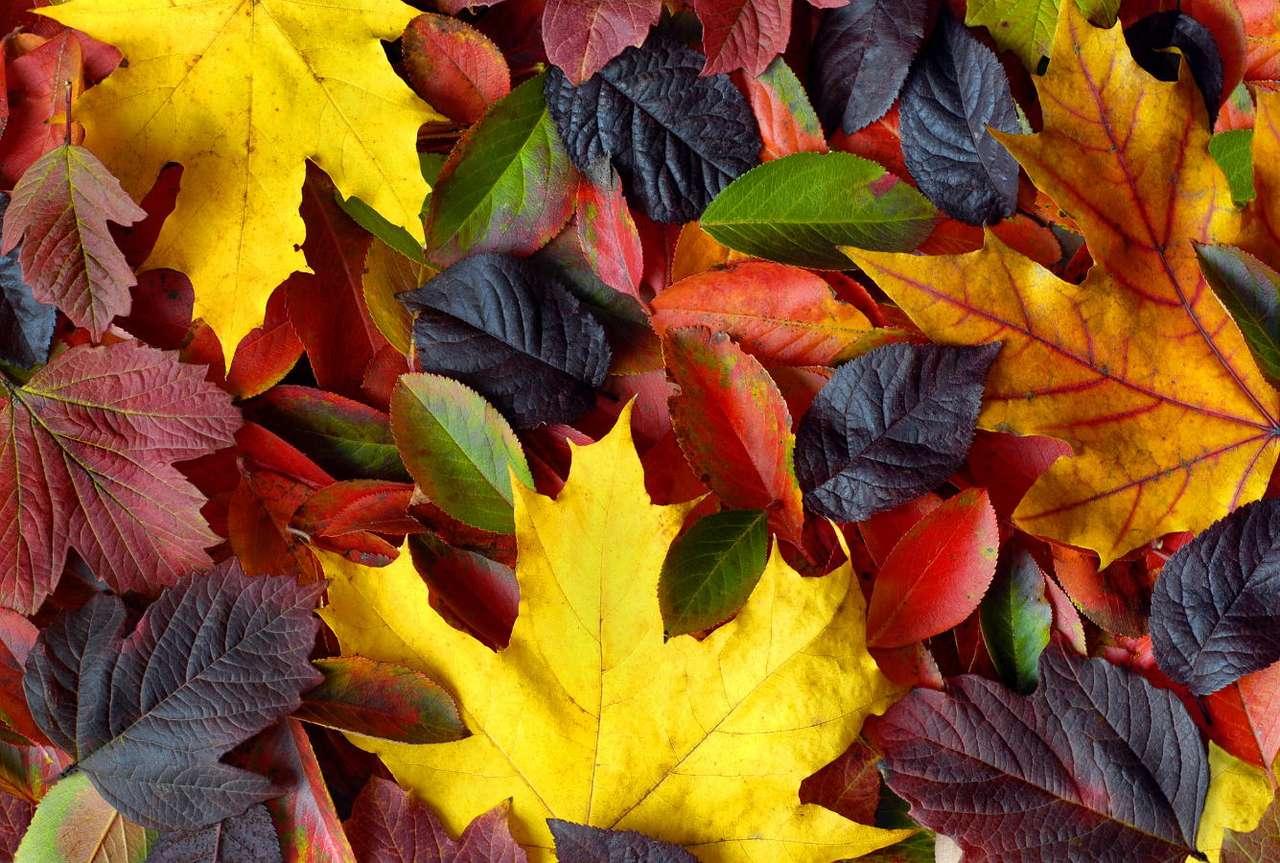 Jesienne liście - Liście drzew liściastych to organy sezonowe. Okres ich życia jest ograniczony do kilku miesięcy. Dlatego też jesienią, gdy dzień staje się coraz krótszy i zmniejsza się nasłonecznienie, pro (15×10)