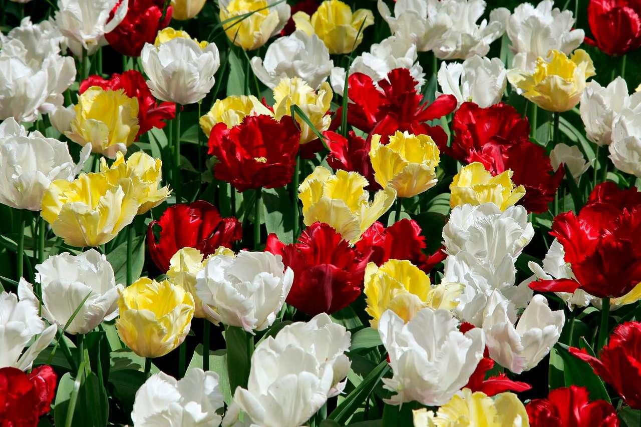 Egzotyczne tulipany