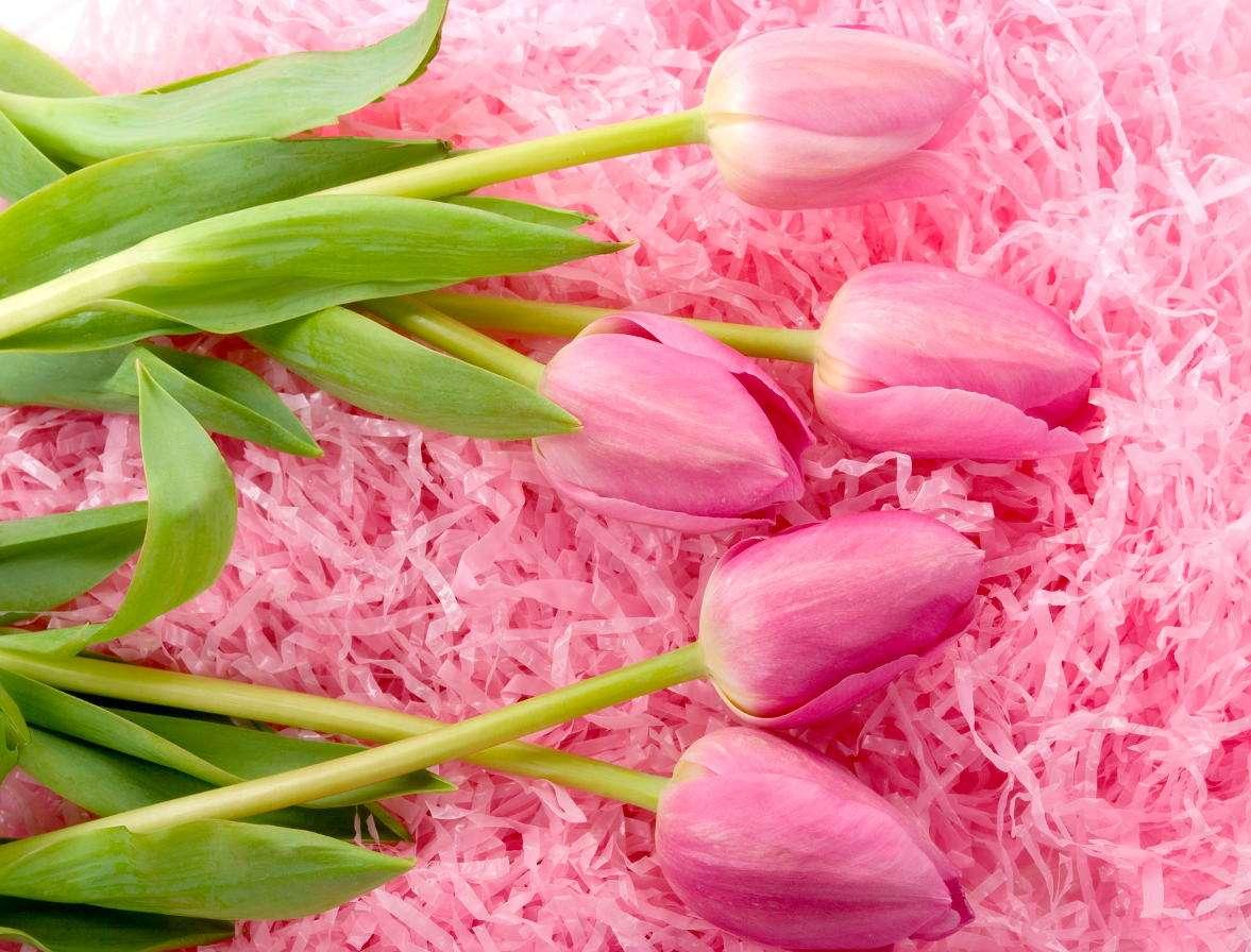 Różowe tulipany - Tzw. język kwiatów jest wynalazkiem perskim. Symbolika konkretnych gatunków, barw, a także sposobu ich przybrania i przekazania stanowiła dyskretny, ale znaczący komunikat. Sztuka ta rozwinęła (11×8)