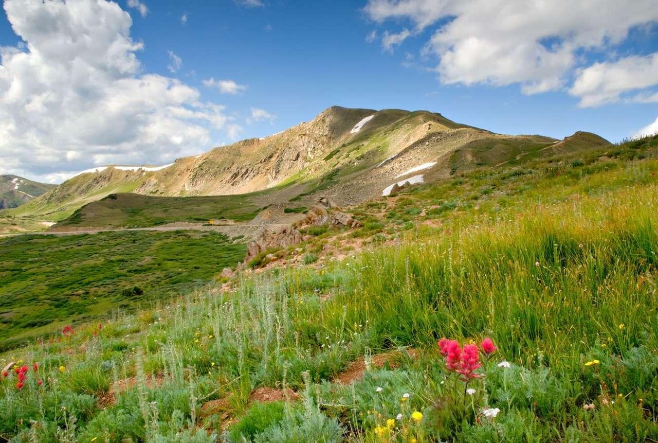 Zielona łąka na Przełęczy Loveland (USA) - Trudne warunki klimatyczne w górach sprawiają, że rosną tam tylko specjalnie przystosowane do tego gatunki roślin. Wraz ze wzrostem wysokości nad poziomem morza zmniejsza się ciśnienie atmosfe (12×8)