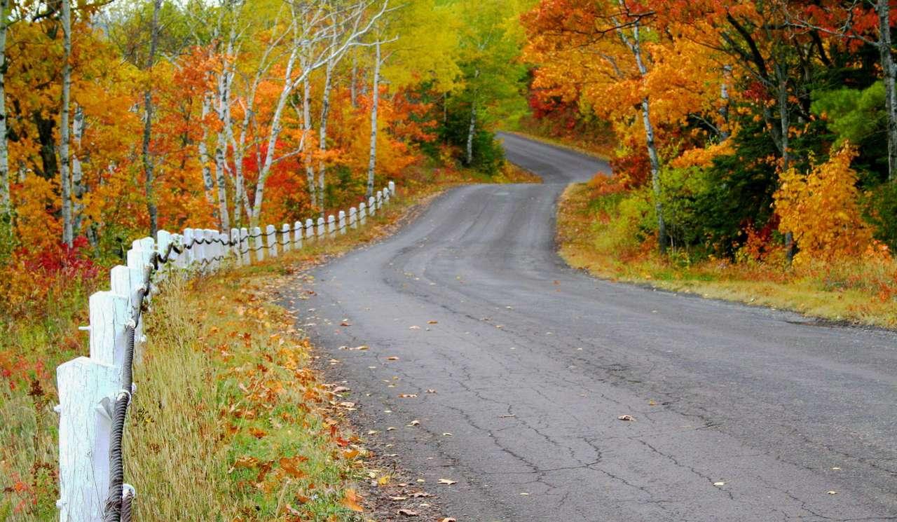 Droga wśród jesiennych drzew (Stany Zjednoczone) - Jesienne barwy drzew zachęcają do wyjścia z domu - jedni wybierają spacer wśród szeleszczących liści, inni rowerowe rajdy po leśnych ostępach. Ale są też tacy, którzy wsiadają w samochó (14×7)