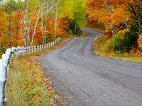 Droga wśród jesiennych drzew (Stany Zjednoczone)
