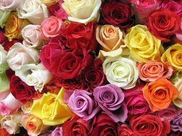 Bukiet wielobarwnych róż