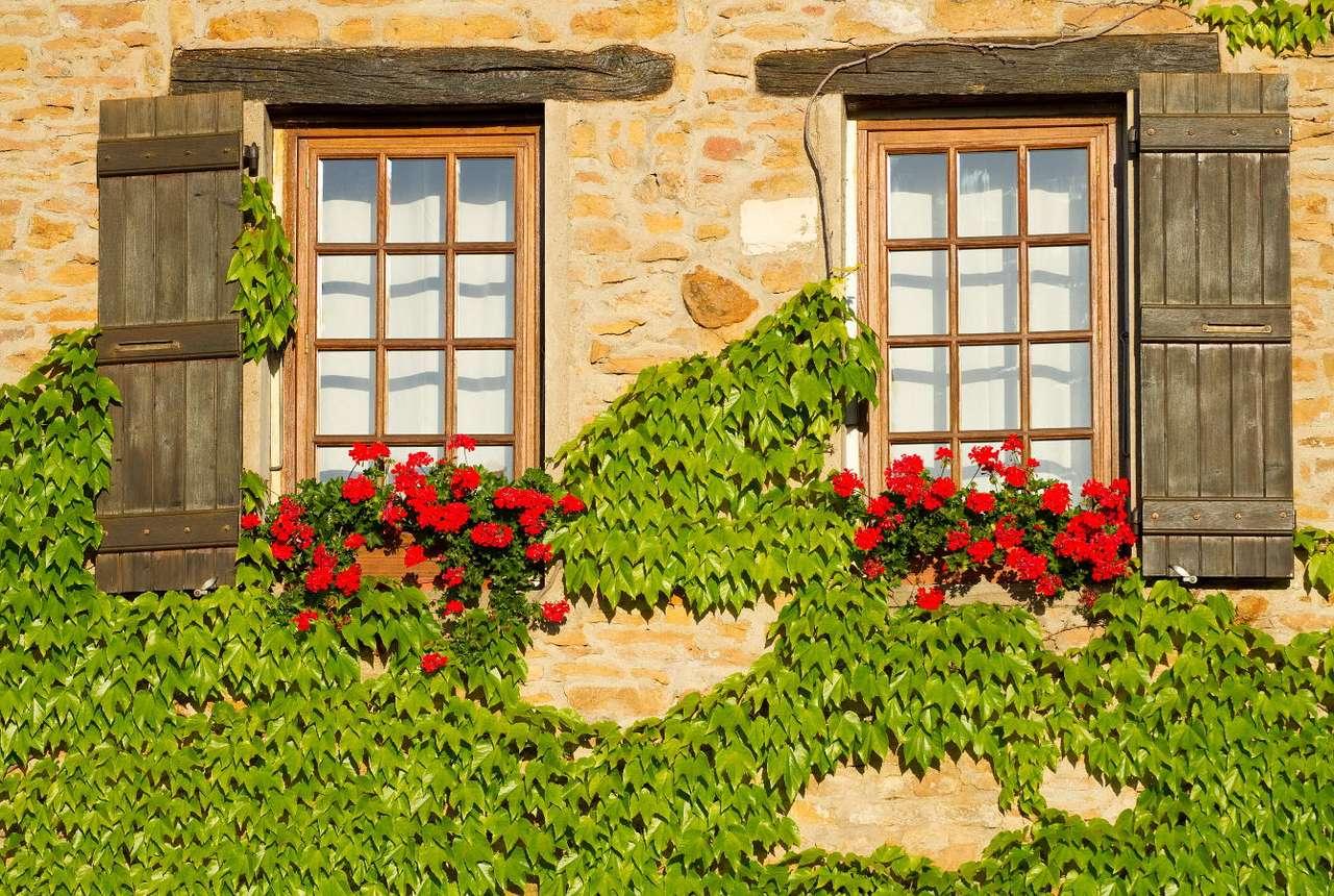 Winobluszcz w Burgundii (Francja)