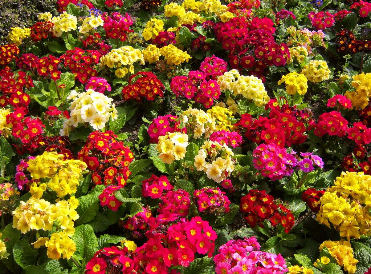 Kwiaty w ogrodzie - Ludzie doceniali estetyczne walory kwiatów na przestrzeni wieków i na terenach obejmowanych przez najróżniejsze kultury. Wielobarwność i różnorodność struktury kwiatów sprawiły, że nie ty (14×11)