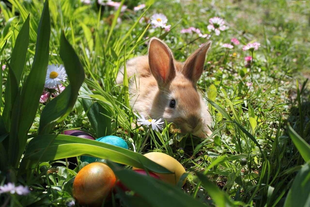Wielkanocny królik z pisankami na wiosennej łące -  (8×6)