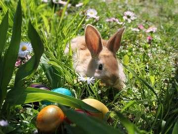 Wielkanocny królik z pisankami na wiosennej łące