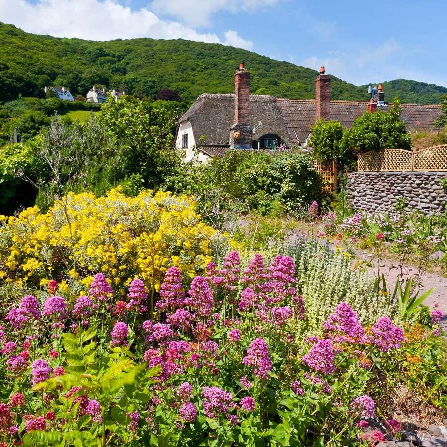 Dom pośród kwiatów w Porlock Weir (Wielka Brytania) - Porlock Weir jest niewielką portową osadą w południowo-zachodniej Anglii. Do dziś znajdują się w niej domy z XVII wieku. Sam port liczy natomiast więcej niż tysiąc lat! Pierwsze wzmianki o n (12×9)
