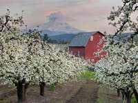 Malownicze sady w Hood River (USA) puzzle